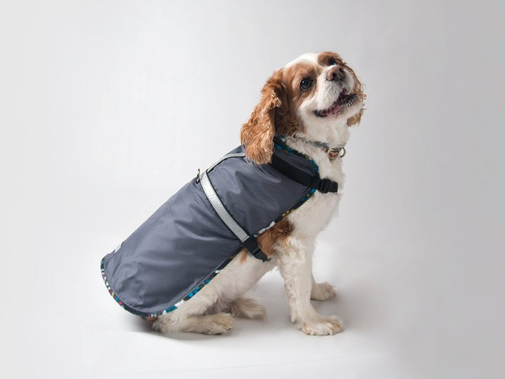 best pet products 5, pet raincoat
