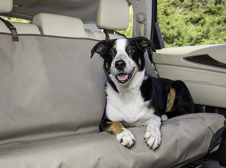 dog on seat cover