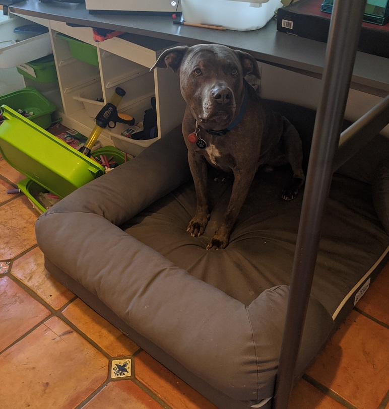 comfy dog bed that's best for pets of quarantine