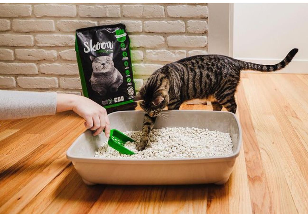happy cat with Skoon litter